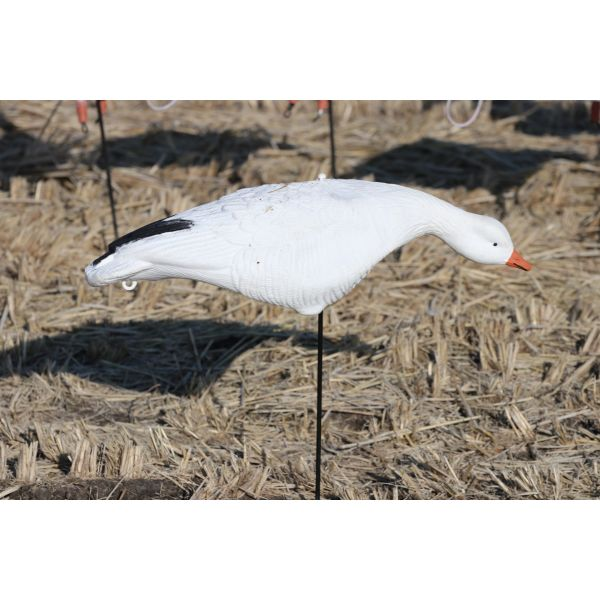 skyfly feeding Snow Goose Fullbody Decoys